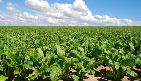 Le désherbage thermique en agriculture